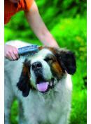 brossage chien
